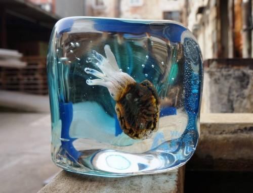 acquario seppia oball murano